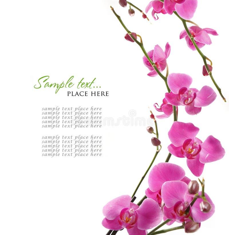Rosafarbener Orchideehintergrund stockbild