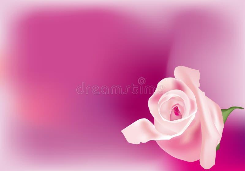 Rosafarbener Rosebud lizenzfreie abbildung
