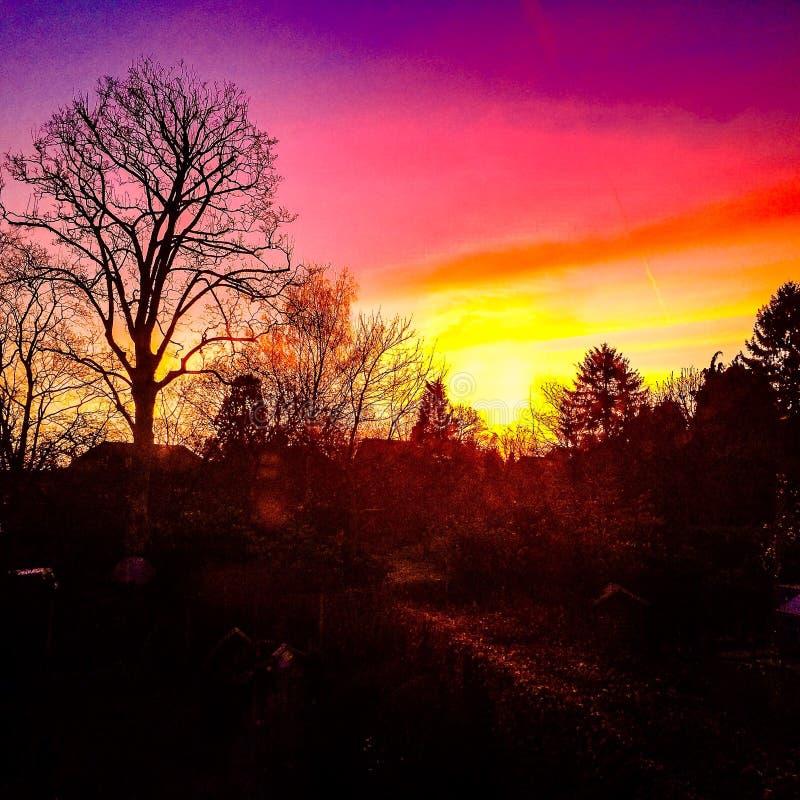 Rosafarbener Sonnenaufgang stockfotos