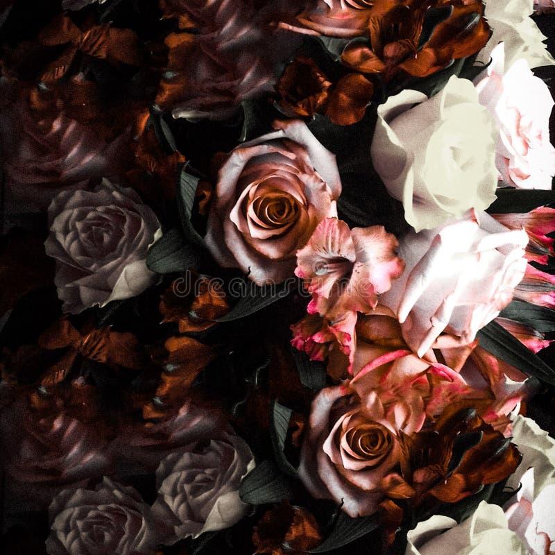 Rosafarbener Traum der Dunkelheit stockbild