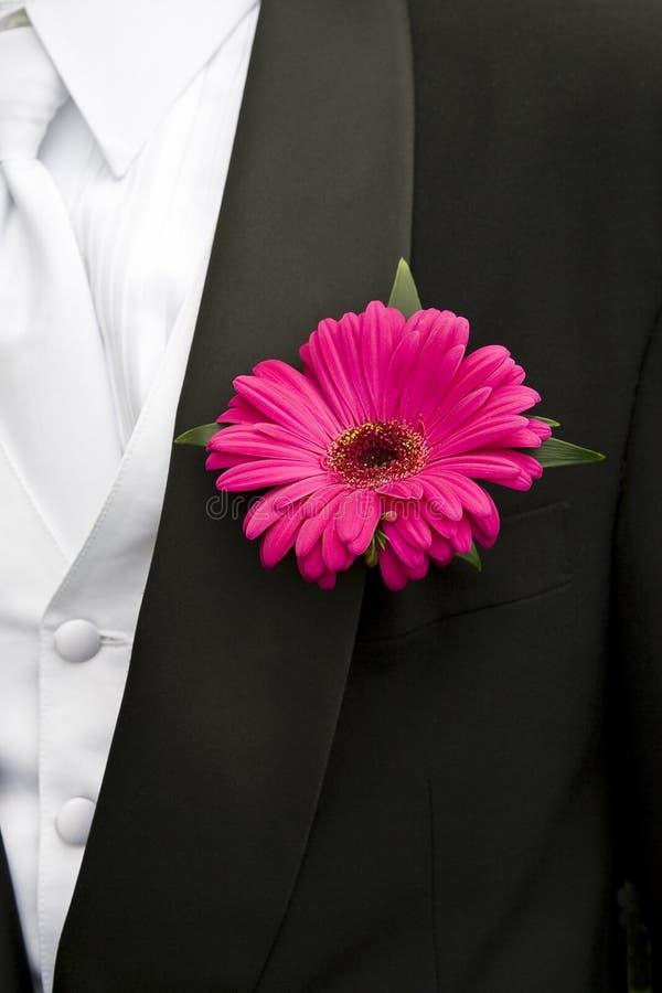 Rosafarbenes Gänseblümchen auf Smoking lizenzfreies stockbild