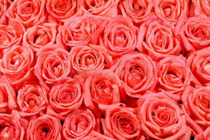 Rosafarbenes Muster der Orange stockbild