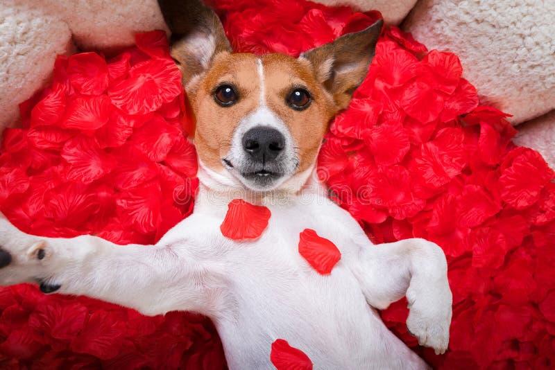 Rosafarbenes selfie Valentinsgrüße der Hundeliebe stockfotos