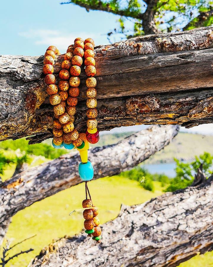 Rosario de madera que cuelga en el árbol rosario de madera en una rama del pino fotos de archivo libres de regalías