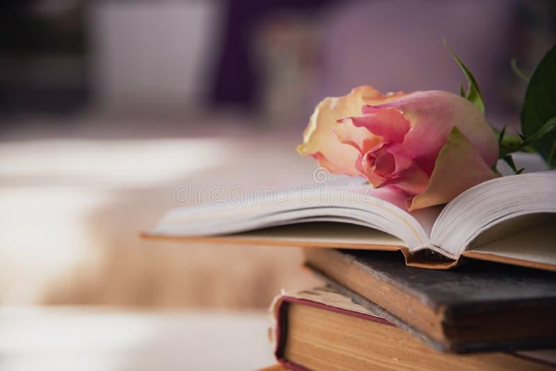 Rosarose auf bunck von Büchern lizenzfreies stockfoto