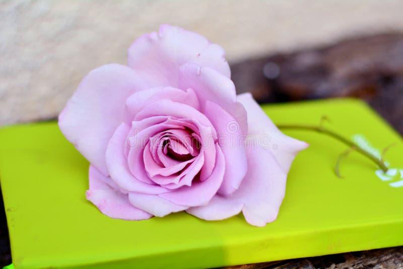 Rosarose auf einem grünen Notizbuch stockfotografie