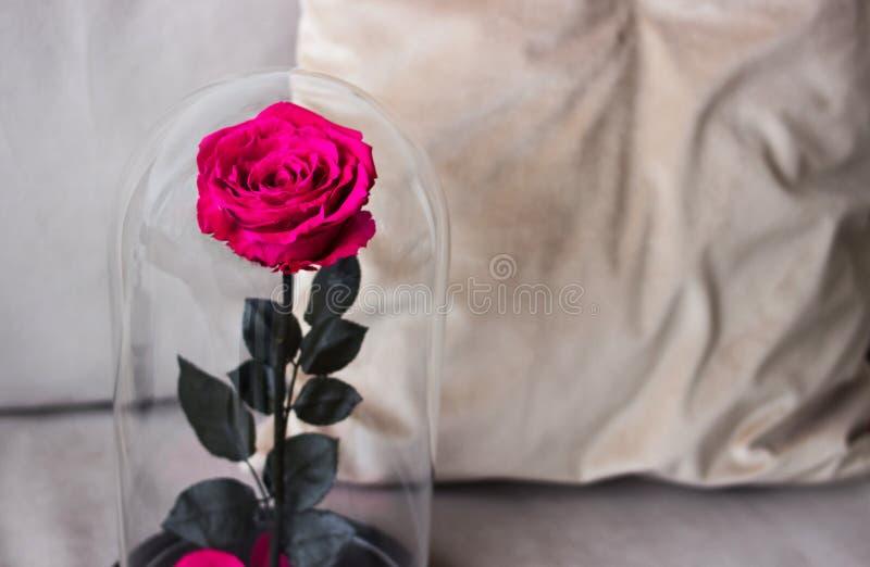 Rosarose in einer Flasche Langlebig stieg, konserviert stockfotos