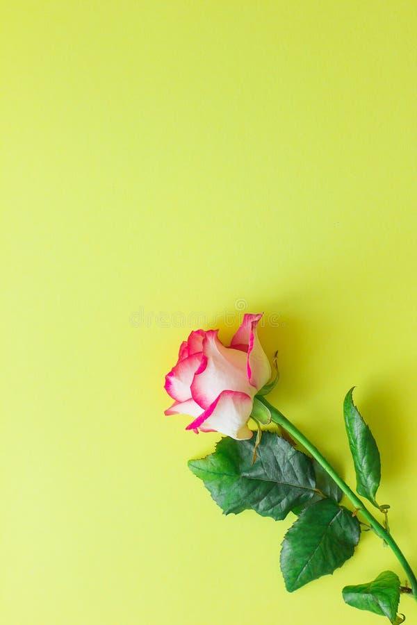 Rosarosenblume auf einem hellen gelben Hintergrund vertikal lizenzfreie stockfotografie
