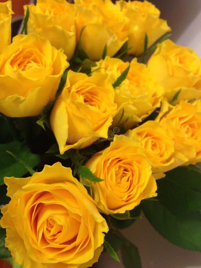 Download Rosas foto de archivo. Imagen de regalo, flores, amarillo - 100525768