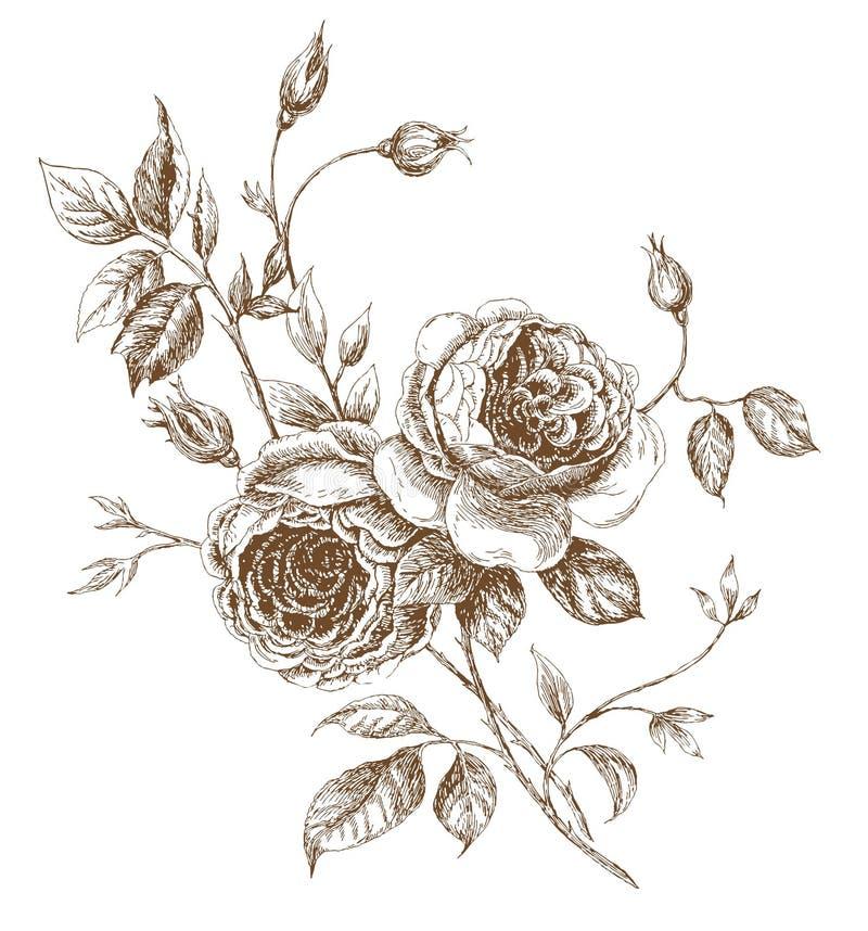 Rosas ilustração stock