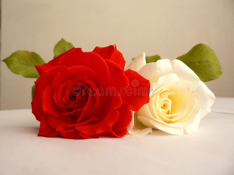 Download Rosas imagen de archivo. Imagen de verde, rojo, junto, rosas - 179741