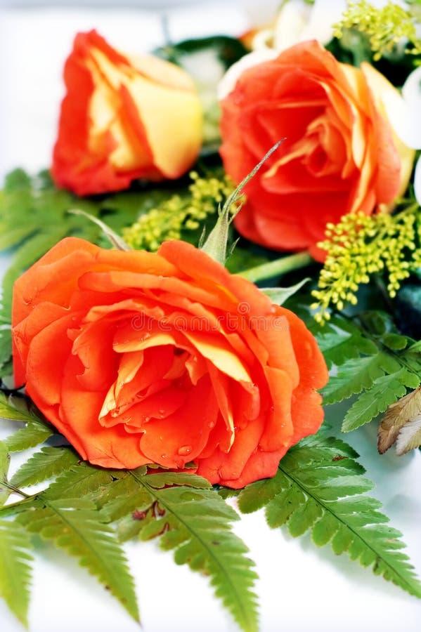 Rosas alaranjadas fotos de stock royalty free
