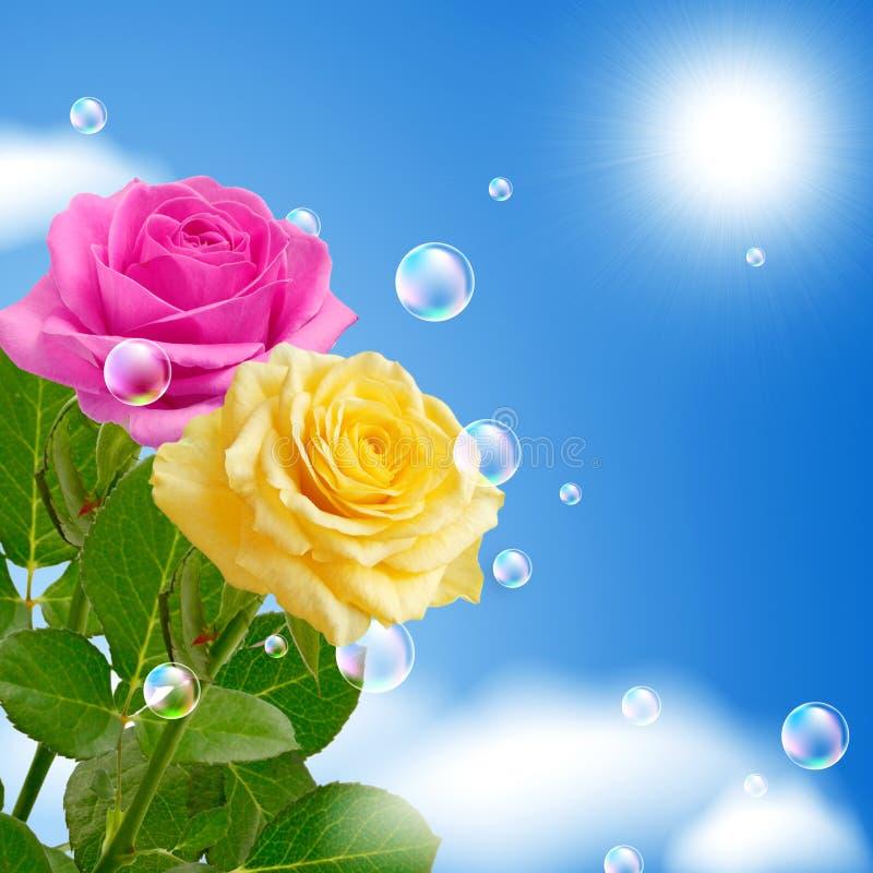 Rosas amarelas e cor-de-rosa imagem de stock royalty free
