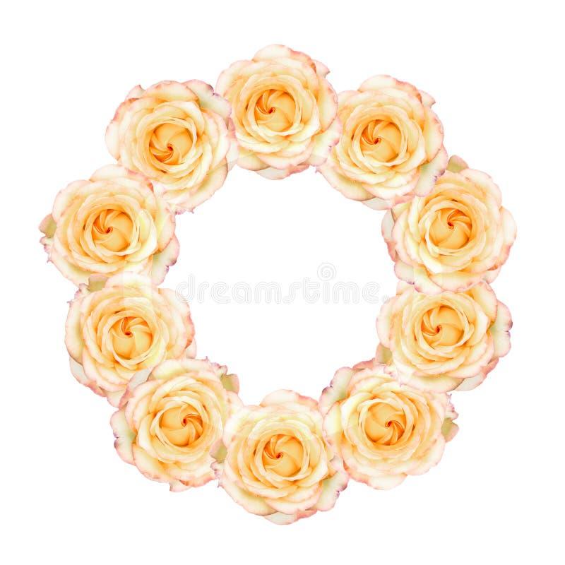 Rosas amarillas en colores pastel dispuestas en guirnalda fotos de archivo