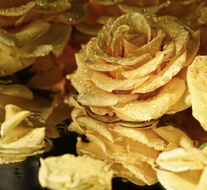 Rosas amarillas hermosas en gotitas del agua fotografía de archivo libre de regalías