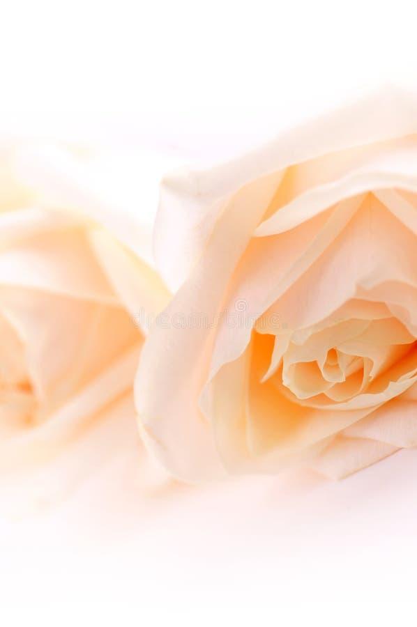 Rosas amarillentas delicadas imágenes de archivo libres de regalías