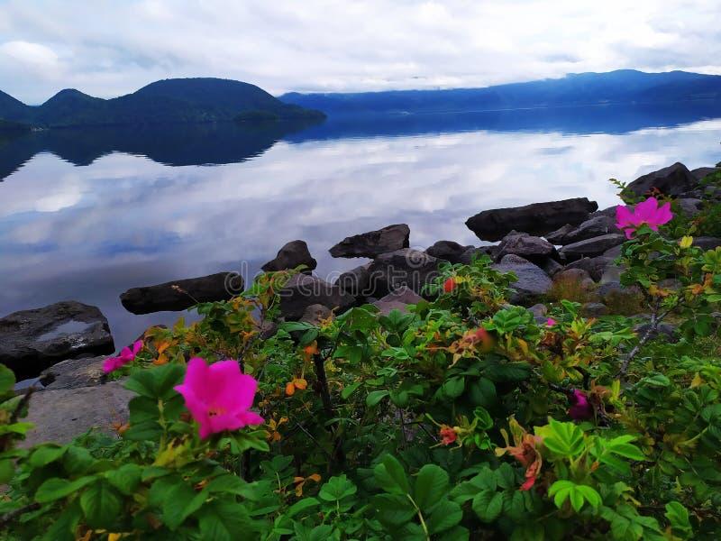 Rosas ao lado do lago foto de stock royalty free