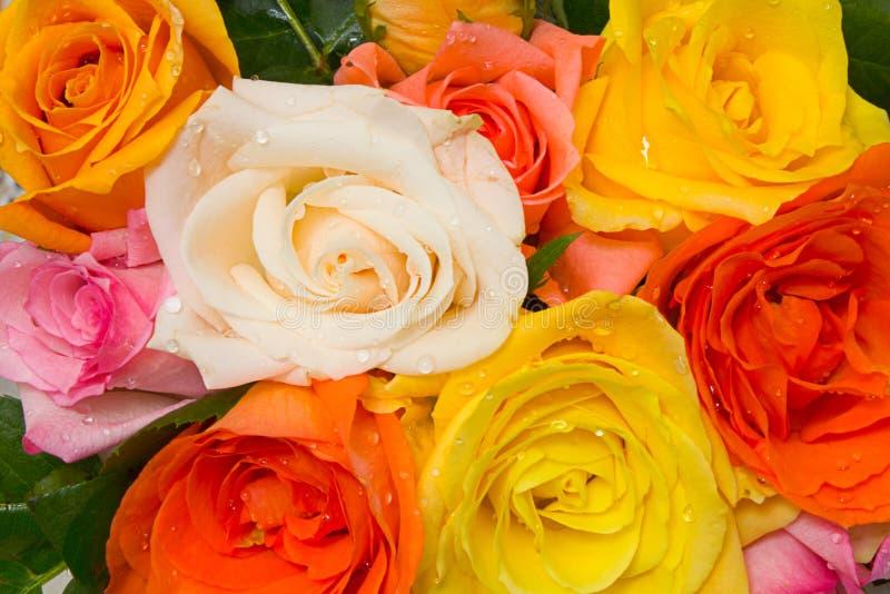 Rosas Assorted fotografia de stock