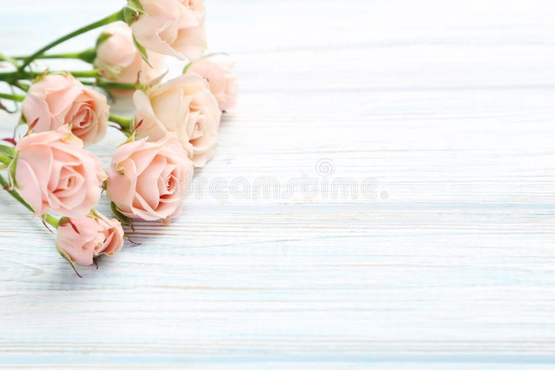 Rosas bege foto de stock
