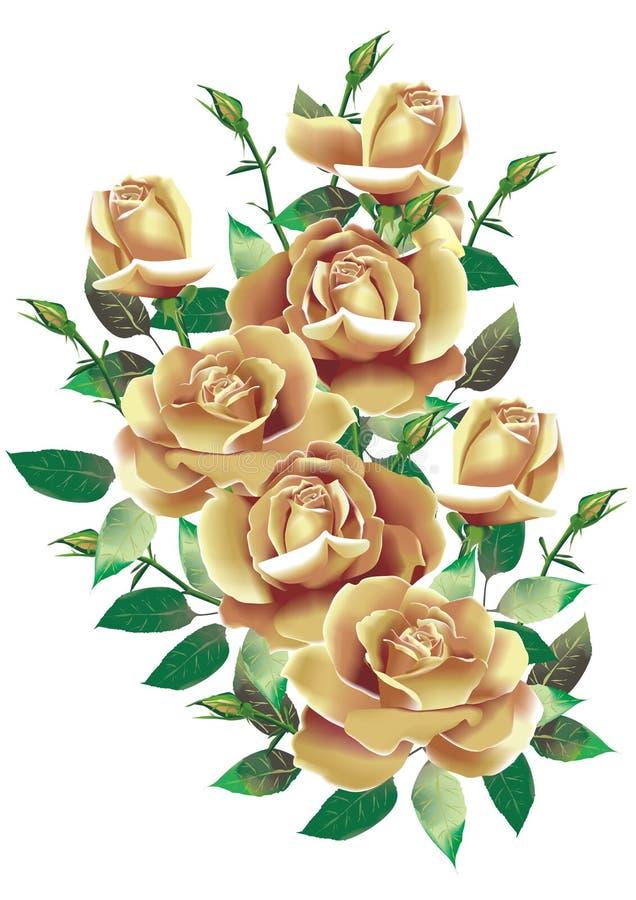 rosas bege ilustração royalty free