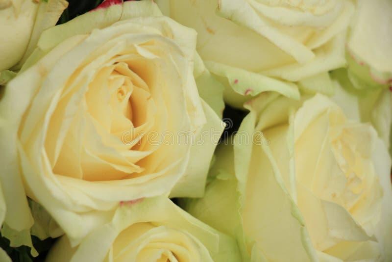 Rosas blancas de la boda foto de archivo
