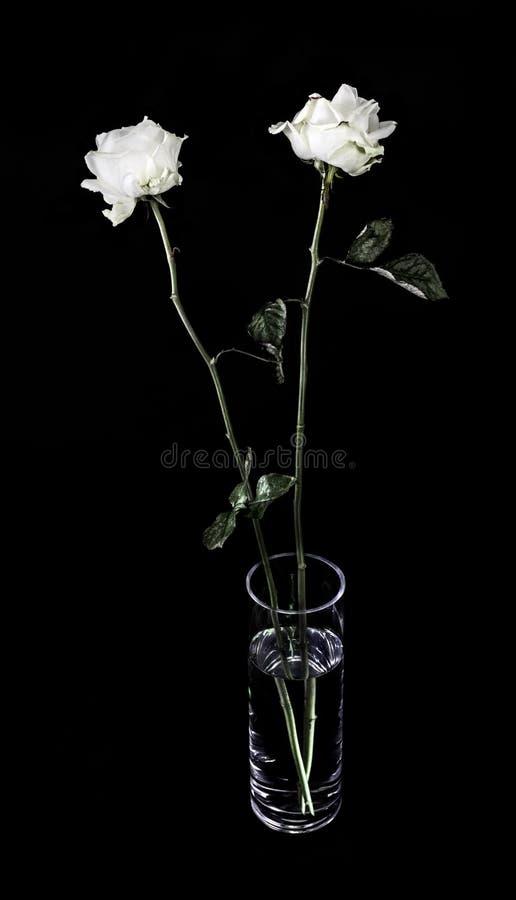 Rosas blancas en un florero de cristal imagen de archivo libre de regalías