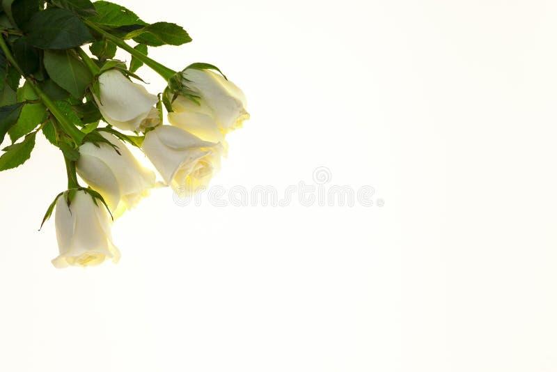 Rosas Blancas Hermosas En El Ramo Fondo Para Las