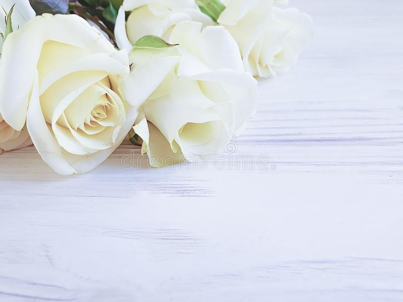 Rosas bonitas no quadro de madeira branco do fundo foto de stock royalty free