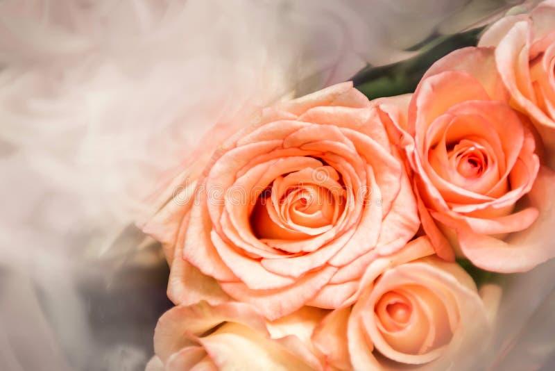 Rosas, borrosas de rosas dulces del color en la falta de definición suave de la textura para el fondo con estilo retro del vintag fotografía de archivo libre de regalías