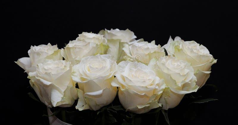 Rosas brancas foto de stock