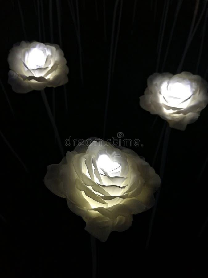 Rosas brancas de incandescência na rua da noite Flores conduzidas na rua em Seoul foto de stock