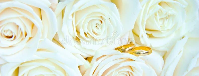 Rosas brancas frescas bonitas com anéis de ouro, conceito do casamento imagens de stock