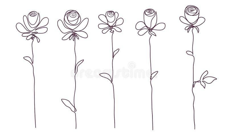 rosas Coleção do esboço cor-de-rosa isolado da flor no fundo branco ilustração royalty free