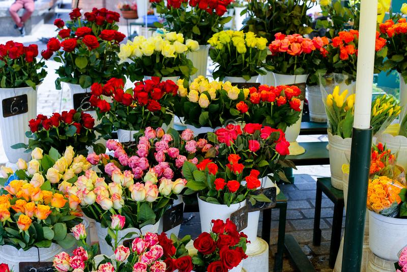 Rosas coloridas em uns vasos no florista imagem de stock