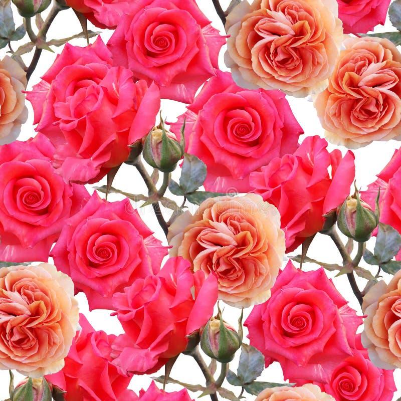Rosas coloridas hermosas lindas Fondo floral inconsútil de la foto Ilustraciones de las técnicas mixtas de Digitaces para el pape fotografía de archivo libre de regalías