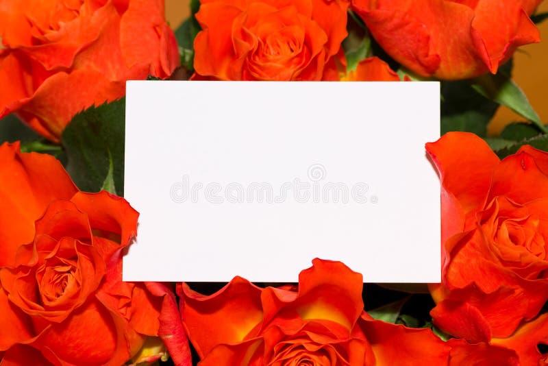 Rosas com cartão em branco fotos de stock