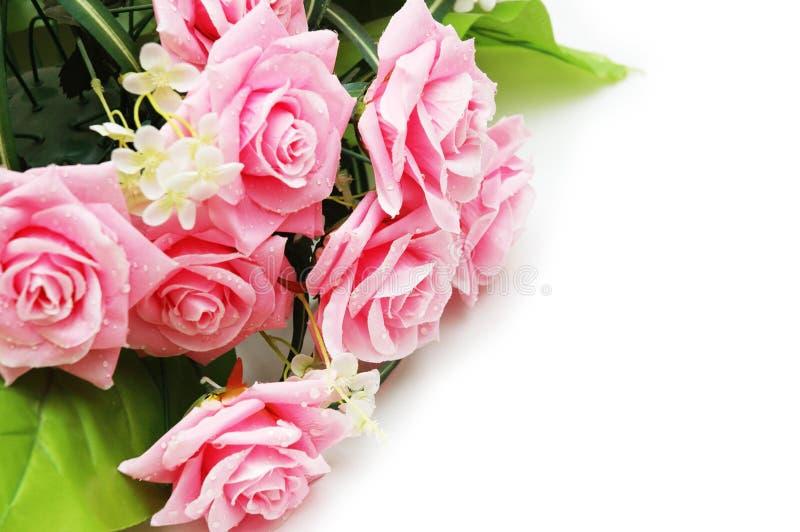 Rosas com gotas da água imagens de stock