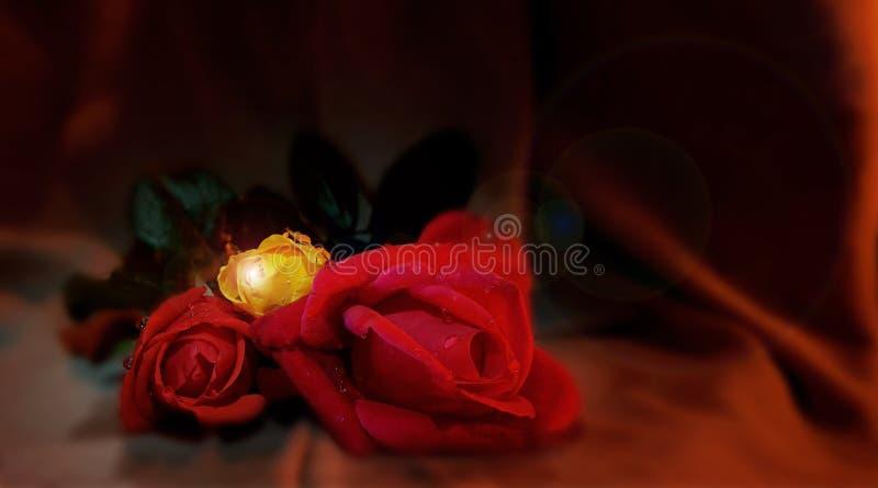 Rosas com gotas da água foto de stock royalty free
