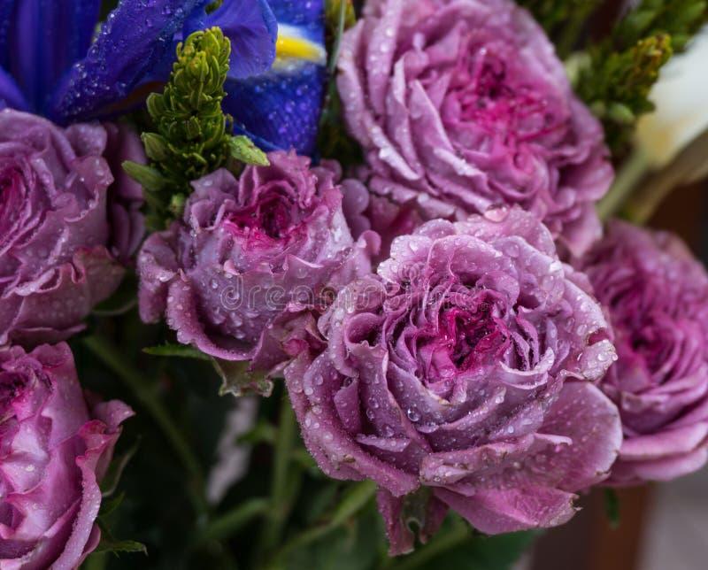 Rosas con descensos del agua en los pétalos fotografía de archivo