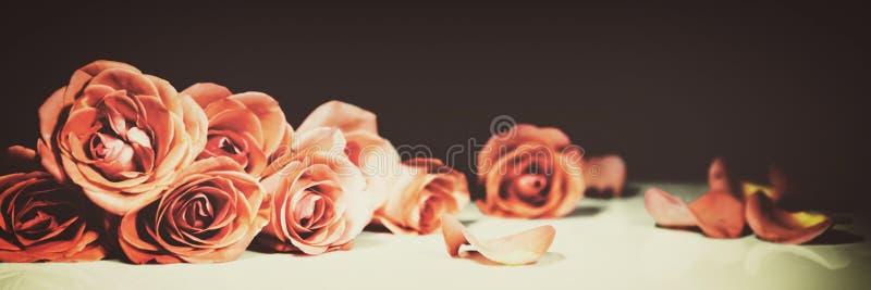 Rosas con el filtro del vintage imágenes de archivo libres de regalías
