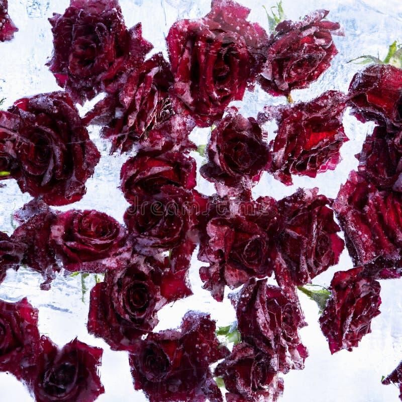 Rosas congeladas en cubo de hielo Rose en un cubo del hielo, composición hermosa de rosas rojas en hielo foto de archivo