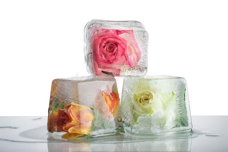 Rosas congeladas en cubos de hielo fotos de archivo libres de regalías