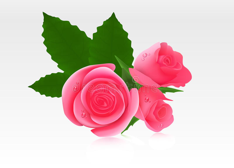 Rosas cor-de-rosa ilustração royalty free