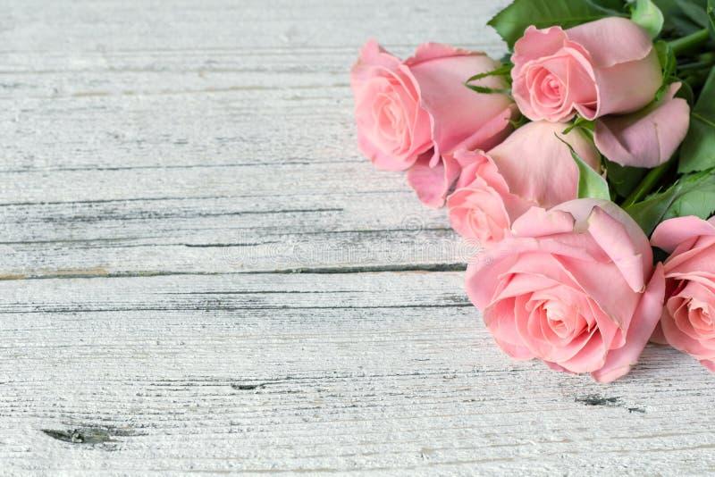 Rosas cor-de-rosa bonitas foto de stock royalty free