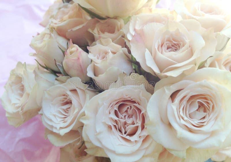 Ramalhete fresco da rosa do rosa fotografia de stock royalty free