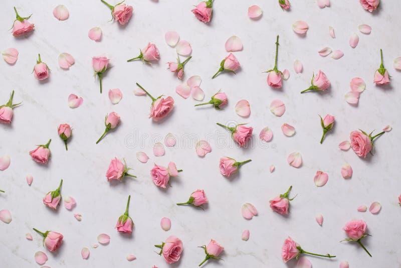 Rosas cor-de-rosa em um fundo branco Vista superior fotografia de stock