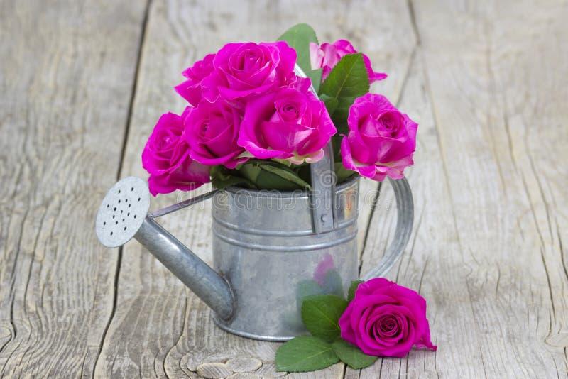 Rosas cor-de-rosa em uma lata molhando imagens de stock