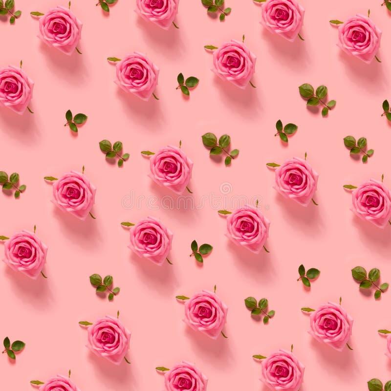 Rosas cor-de-rosa no fundo do rosa pastel fotografia de stock royalty free