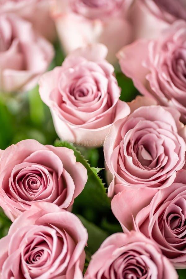 Rosas cor-de-rosa nos vasos de vidro Cor pastel do grupo o conceito de um florista em um florista wallpaper fotografia de stock royalty free