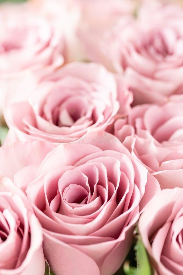 Rosas cor-de-rosa nos vasos de vidro Cor pastel do grupo o conceito de um florista em um florista wallpaper imagem de stock